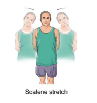 scalene stretch exercise for neck strain rehabilitation