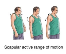scapular active range of motion exercise for frozen shoulder rehabilitation