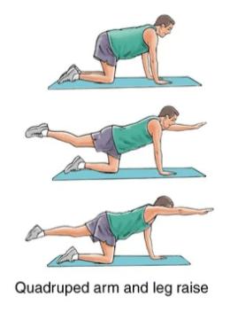 quadruped arm and leg raise exercise for upper back strain rehabilitation
