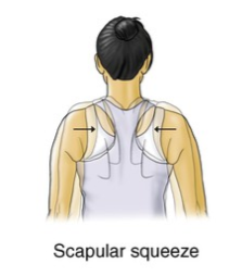 scapular squeeze exercise for upper back strain rehabilitation
